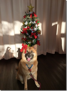 こうめクリスマス1