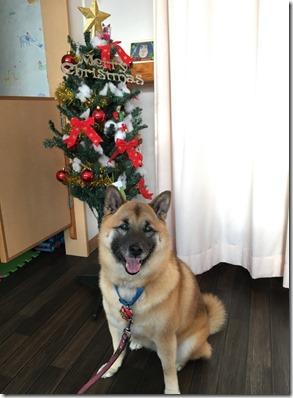 こうめクリスマス3