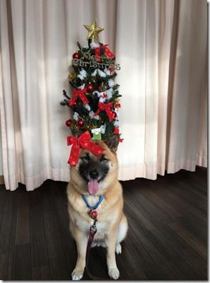 こうめクリスマス4